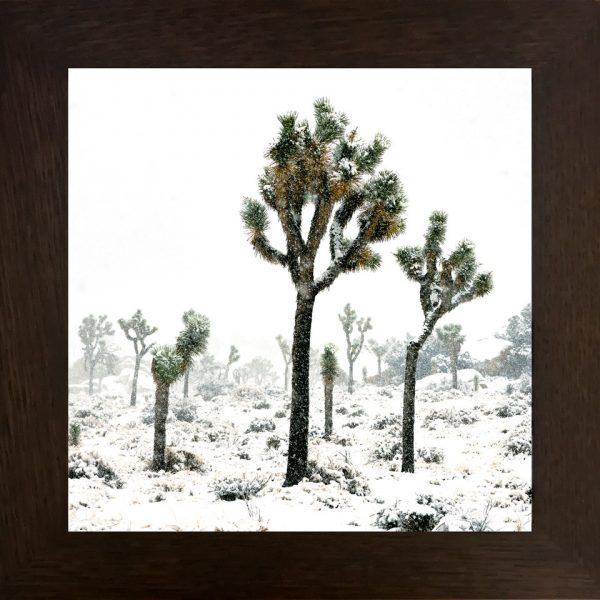 Dolde_Doug_Snow_Day in_Joshua_Tree_National_Park_Frame