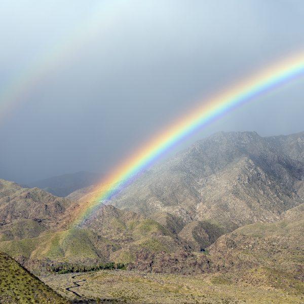 Harvey_Millicent_Rainbow_of_Hope